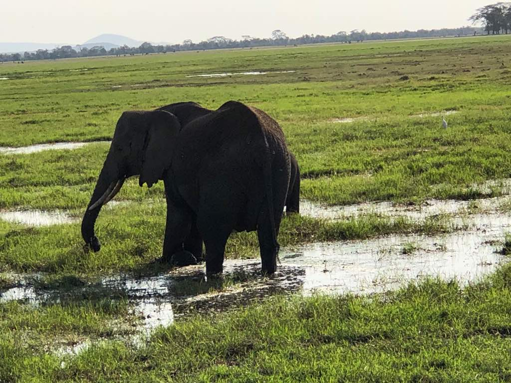 Elephant On A Rainy Day At Amboseli