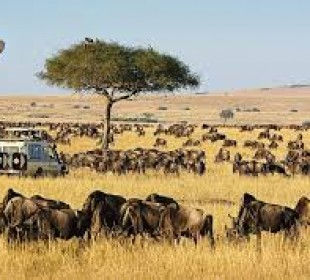 3-Day Masai Mara Safari & Wildebeest Migration