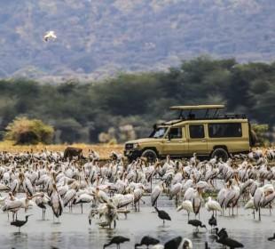 3-Day Tanzania Camping Safari