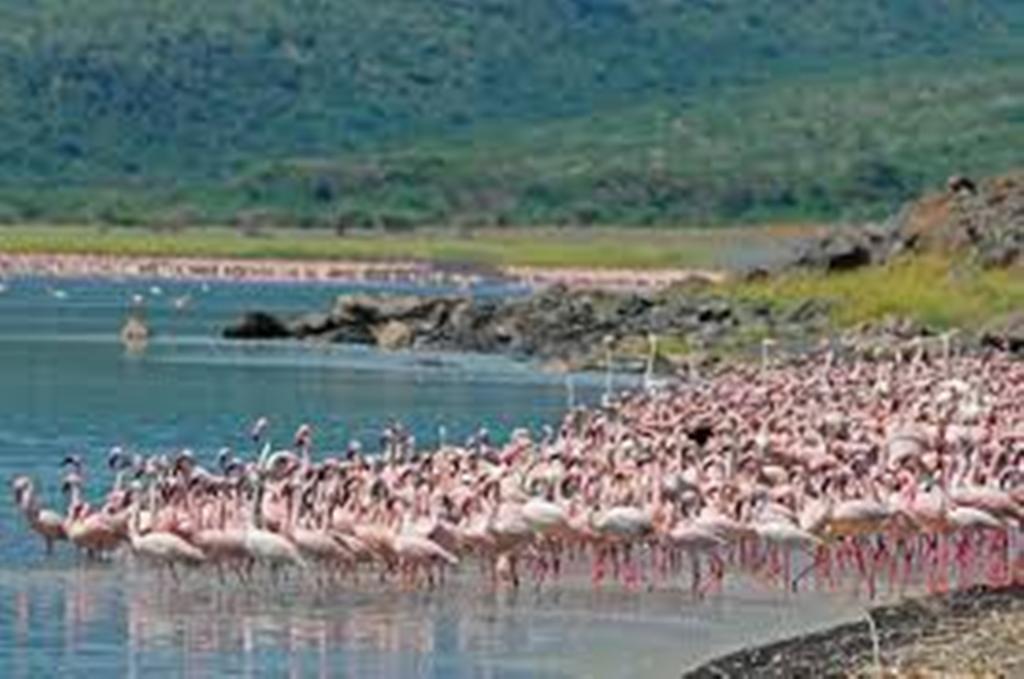 Lake Naivasha 3