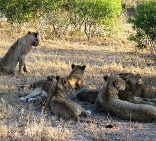 Face-off with Africa's Big 5 in the Masai Mara