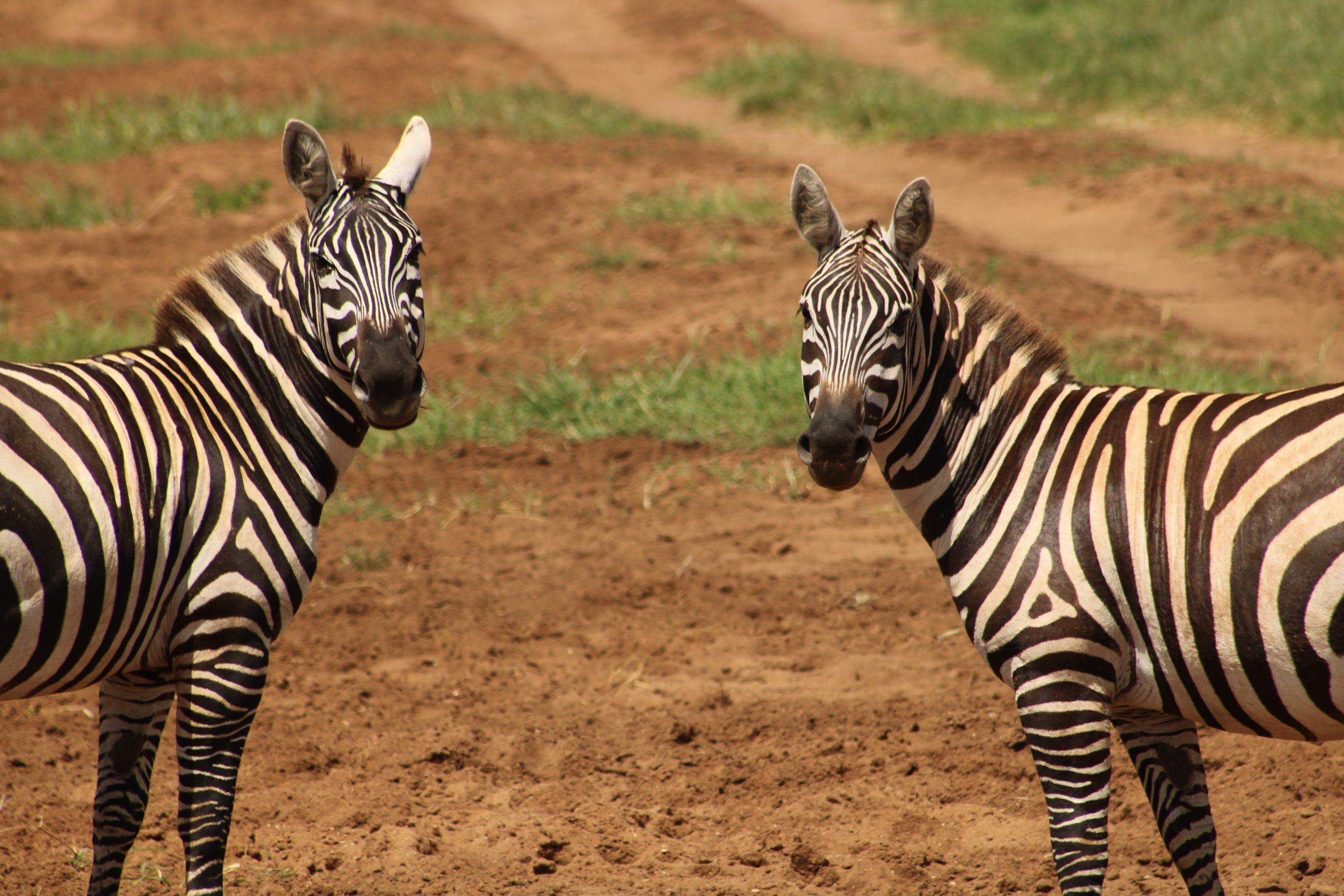9 days safari