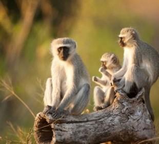 6 Day Ambosei, Nakuru, Masai Mara Budget Camping Safari