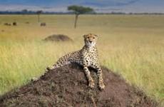 4 Day Lake Nakuru & Masai Mara Budget Safari