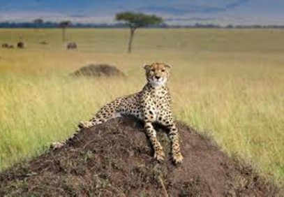 4 Day Lake Nauru & Masai Mara Budget Safari