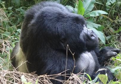 4 Days Gorilla Tracking and Lake Bunyonyi