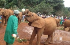 Sheldrick Elephant Orphanage & Giraffe Centre Day Trip