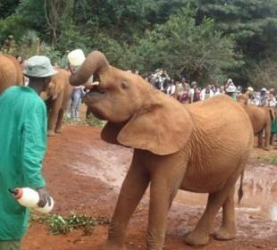 Sheldrick Elephant Orphanage & Giraffe Centre Day Trip