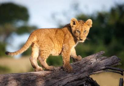 Tanzanian Wild Side Camping Safari
