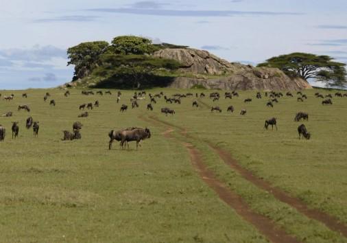 Serengeti National Park Tz