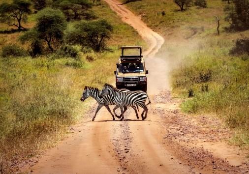Serengeti Wildlife Zebra Game Drive 20005