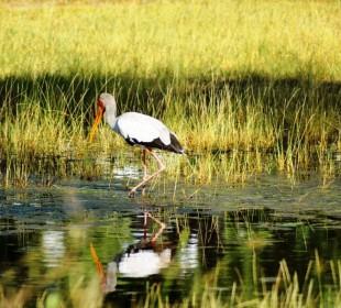 Okavango Delta & Moremi Adventure