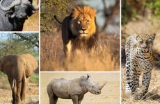 4-Day Big Five Adventure Safari