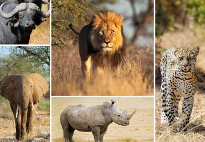 4-Day Big Five Adventure Safari