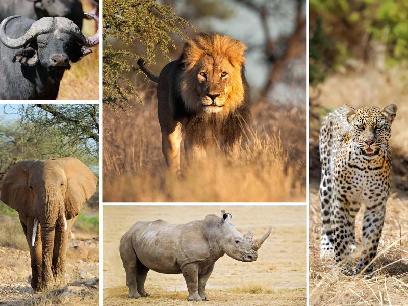 Big 5 Mammals