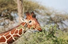 4-Day Maasai Mara Safari and Village Visit