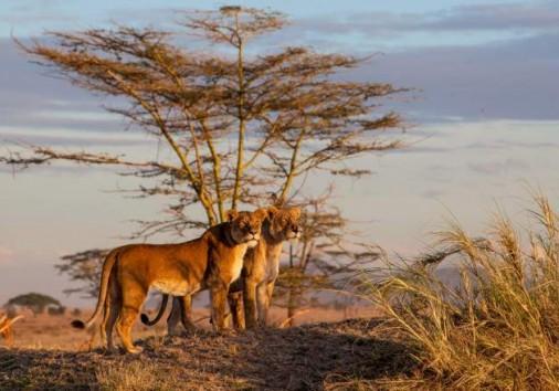 Central Serengeti National Park 005
