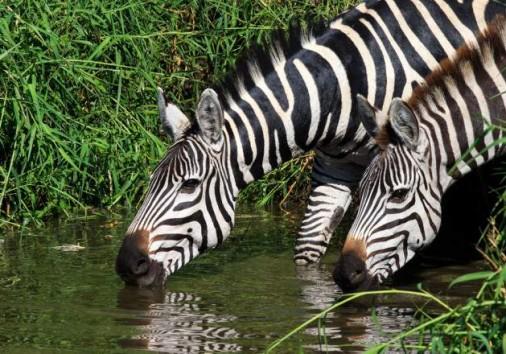 Central Serengeti National Park 008