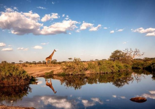 Central Serengeti National Park 010