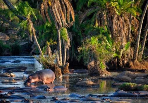 Central Serengeti National Park 013