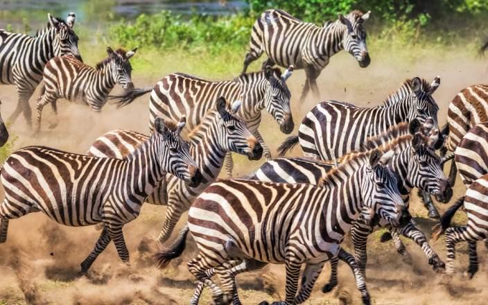 Central Serengeti National Park 014
