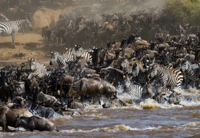11-Day Magnificent Wildlife Migration Safari Experience