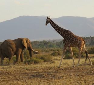 Kenya Savannah & Mountain Forest Safari