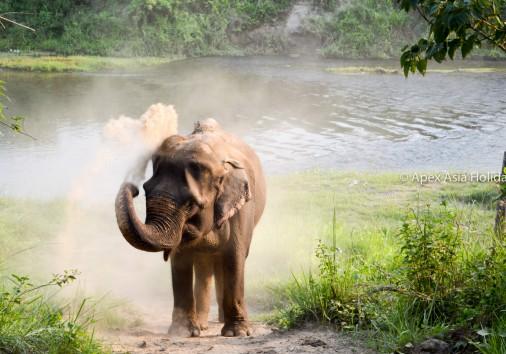 Elephant Just Enjyoing Self At The Bank Of Sauraha