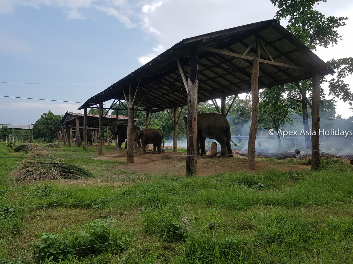 Elephants In The Shed At Chitwan Nepal