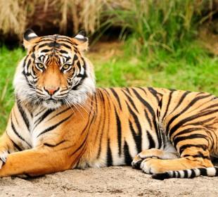 5-Day Chitwan Jungle Safari