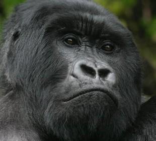 3 Days Gorilla Tracking Safari