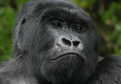 3 Days Gorilla Tracking Safari