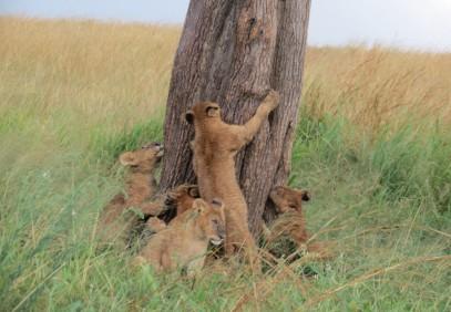 Kenya & Tanzania Wildebeest Migration Safari