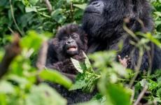 3-Day Uganda Gorilla Trekking Safari in Bwindi National Park