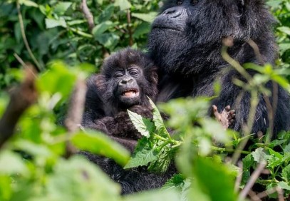 3-Day Uganda Gorilla Trekking Safari in Bwindi National Park
