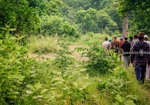 Jungle Walking Inside Chitwan National Park