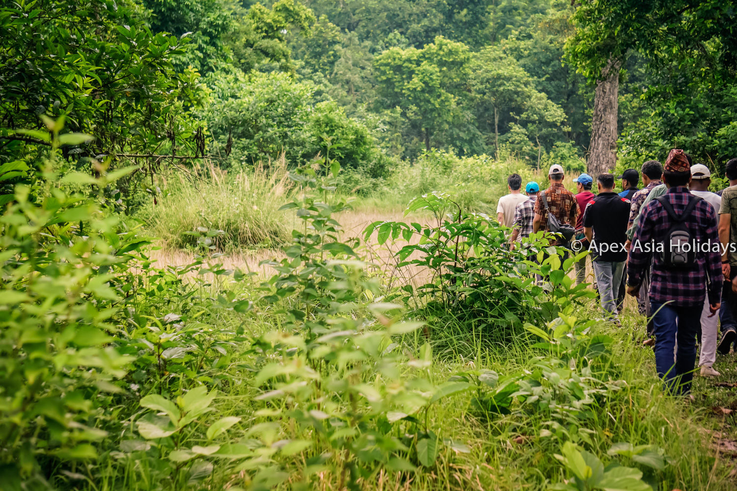 Jungle Walking Inside Chitwan National Park