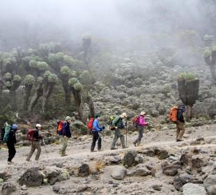 5 Days Marangu Route Mt Kilimanjaro Climb