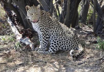 Botswana Highlights: Okavango Delta & Chobe