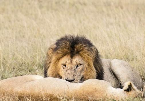 Masai Mara National Reserve 07