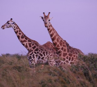 Pearl of Africa Safari Experience