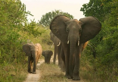 5 Days Queen Elizabeth National Park Wildlife Safari