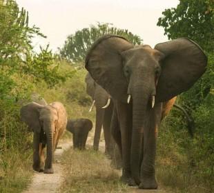 9 Days Gorillas, Chimpanzees and Lions Safari