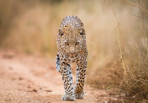 The Big Five Safari