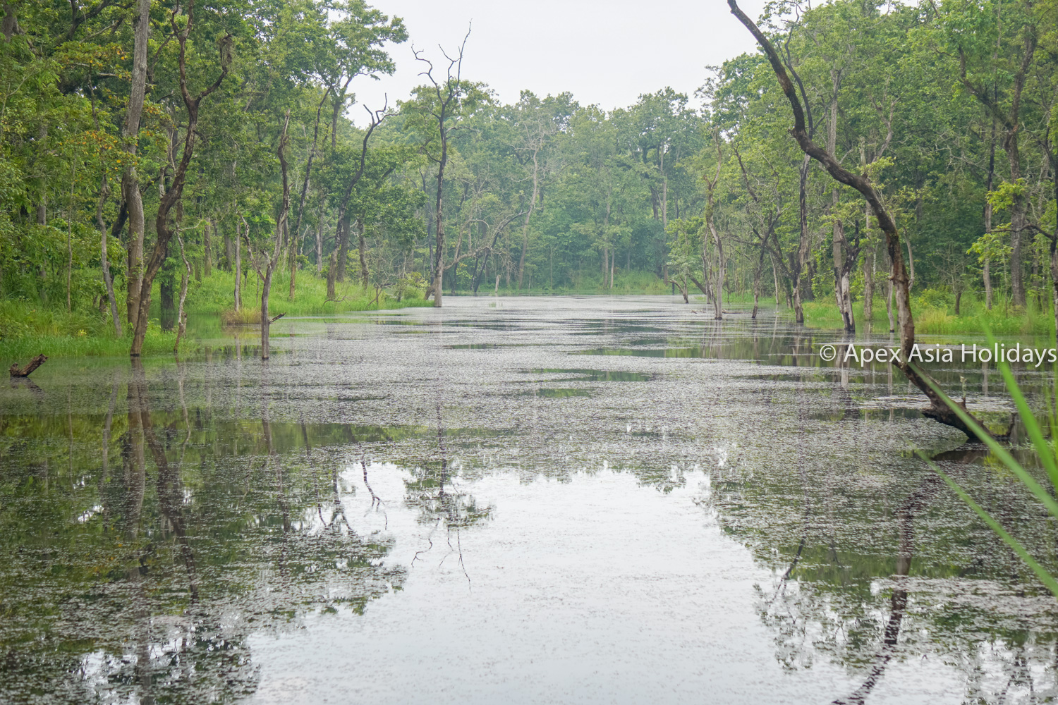 Water Pond Inside The Chitwan National Park