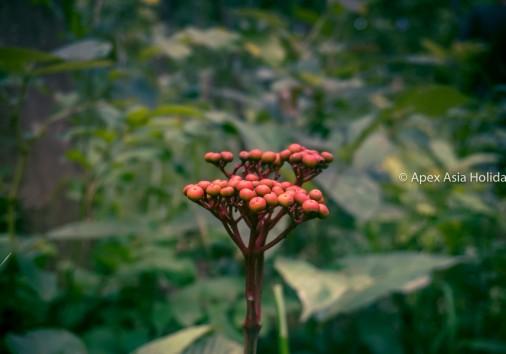 Wild Flower Inside The Jungle In Chitwan National Park