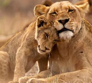 5-Day Camping Safari in Serengeti, Ngorongoro, Lake Manyara & Lake Eyasi