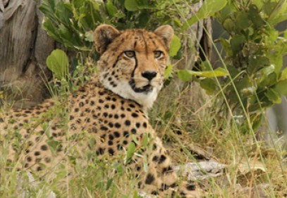 3-Day Budget Masai Mara Joining Safari