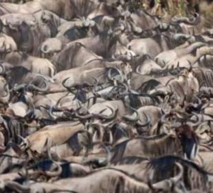 3 Day Masai Mara Group Budget Camping Safari