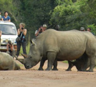 3 Days Murchison Falls National Park & Rhinos